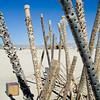 "Burning Man<br />  <a href=""http://www.burningman.com"">http://www.burningman.com</a>"