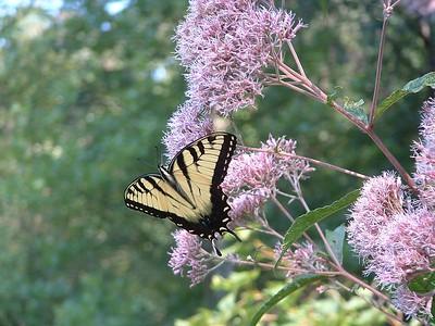 Butterflies and gardens Aug 23, 2004