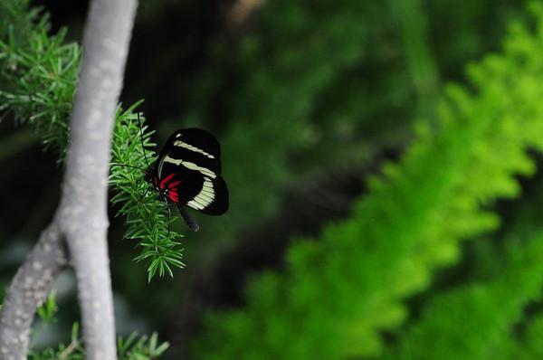Butterflies at Brookside