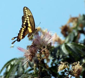 butterflys near Weimar