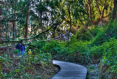 Natural Bridges State Park, Santa Cruz California