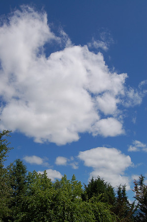 CLOUDS & CLOUD PUPPIES by JUDY GOSNELL