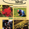 Native Plant Week - rack card side 1