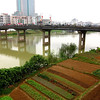 Garden plots along the Huazhou riverfront.