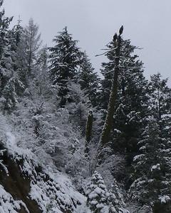 Cabin Fever - Winter Activities