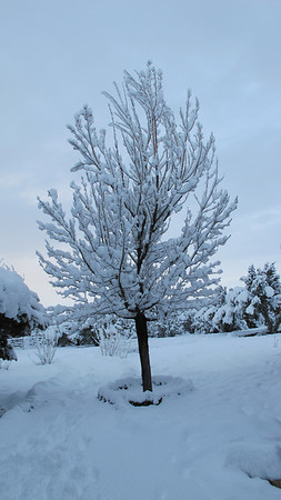 Cabnet-Work-12-2-11-snow-Storm