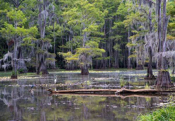 Caddo Lake 2014