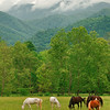 Cades Cove Valley View II
