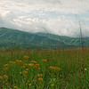 Cades Cove Valley View