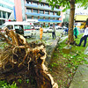 CEBU. A team from the Cebu City Traffic Operations and Management starts to remove a tree that toppled in Fuente Osmeña when typhoon Yolanda passed by Cebu and made landfall in the north twice yesterday morning.  (Allan Defensor photo/Sun.Star Cebu)