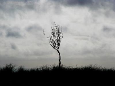 Lone tree - Tempo, County Fermanagh.