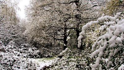 Meon Coppice - Titchfield, Hampshire.