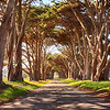 Sir Francis Drake Blvd, Point Reyes, Ca-1