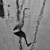 Bird lines