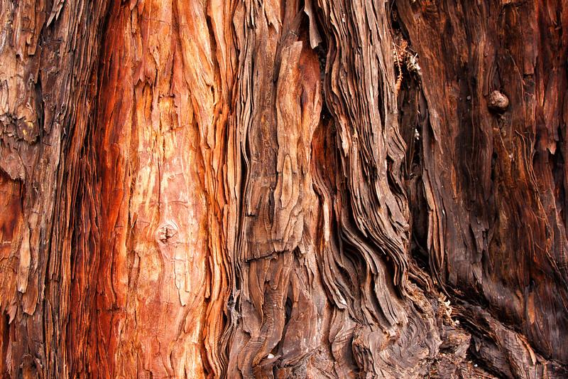 Redwood bark-1