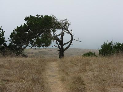 California. 2010 & 2011