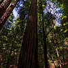 Armstrong Woods Redwood Forest, Guerneville