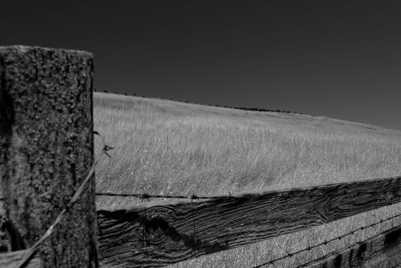 Golden Hill in Black and White