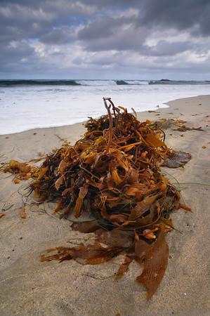 Stormclouds over seaweeds
