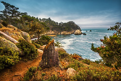 Travel Photography - The Tree Stub at Cypress Cove in Point Lobos (California)