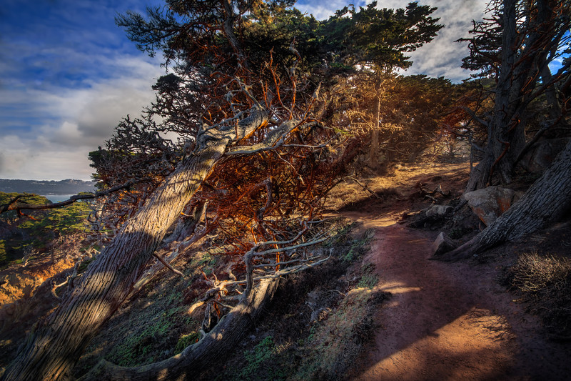Travel Photography Blog - California. Point Lobos. Cypress Grove