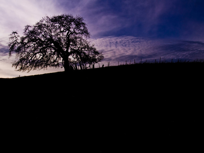 Night Tree, Santa Teresa County Park, San Jose, California