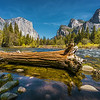 Fallen Tree at Merced River (Yocemite)