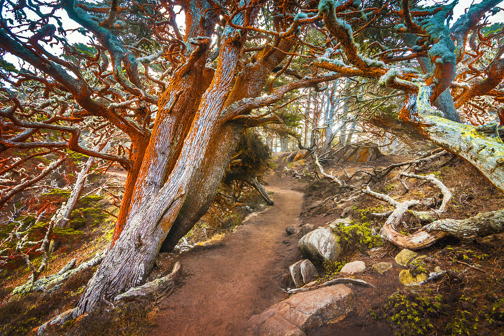 Big Sur California – Places to See and Photograph 29