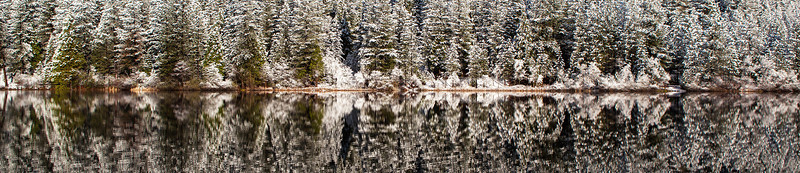White Pines Reflections  - A cold winter morning reflects off the still waters of White Pines Lake near Arnold  in Calaveras County California.