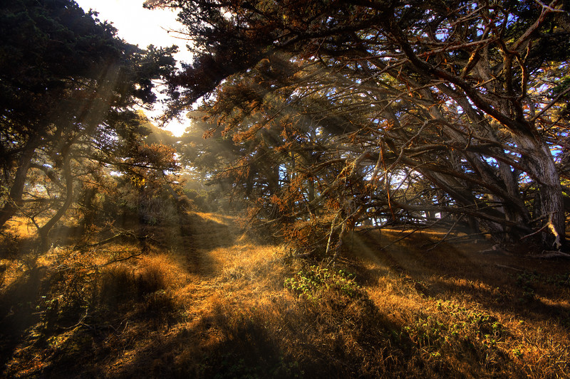 Travel Photography Blog - Point Lobos State Park