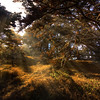 Point Lobos  Magic Forest