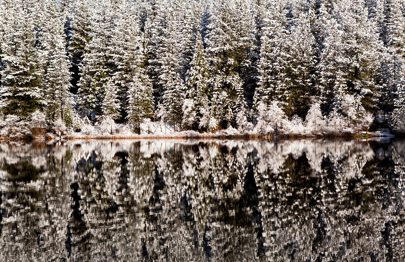 White Pines Lake - A cold winter morning reflects off the still waters of White Pines Lake near Arnold  in Calaveras County California.