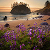 California's Rugged North Coast : Northern California's Coast can be very far away from what most Californians consider to be Northern California.  It is completely different from the San Francisco Bay area.