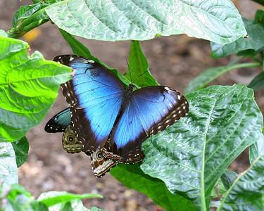 Butterfly Orgy 2.JPG