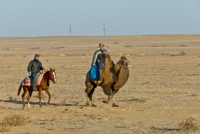 Here come the camel owner