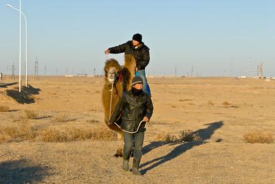Go camel