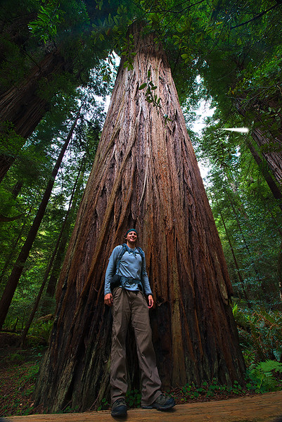 Exploring the California Coastal Redwoods with some wide angle distortion.