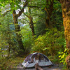 Camping Deep in the Queets Rainforest - Olympic National Park, WA