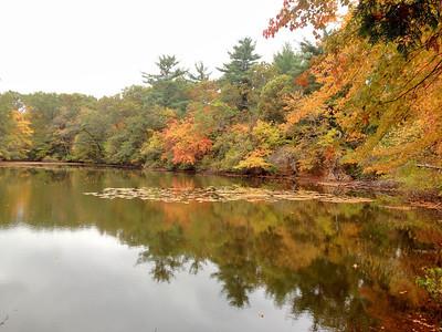 Granny Pond, Lexington