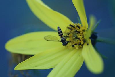 Flowers n bees