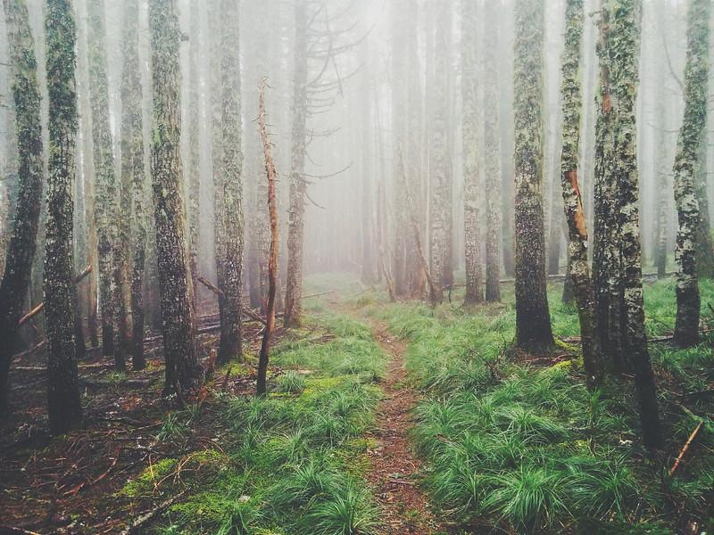 Mount Hood Wilderness under heavy fog