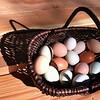 Basket sun eggs