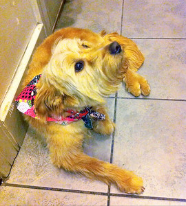 New 'do. Yes, I'm even cuter!