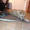 Erin & Taylor on a dog bed together