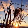 Sunny sunset