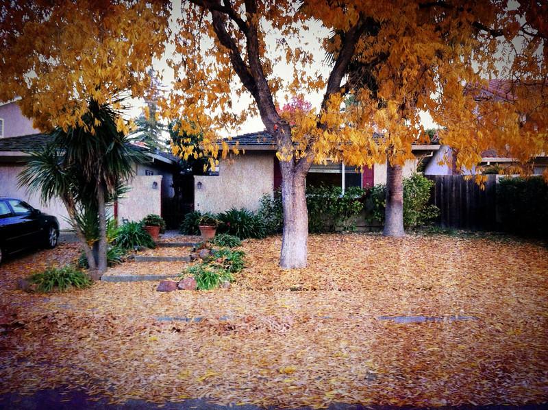 Leafpocalypse