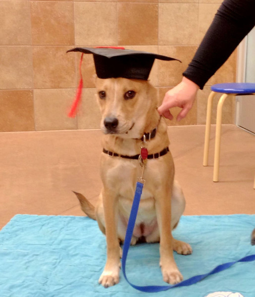 Erin graduating from obedience class.