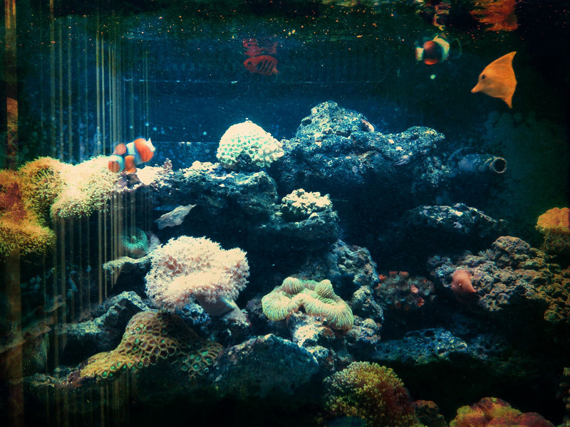 Robert's aquarium.  I'm taking care of the fishes while he's on vacation.