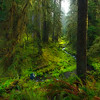 Paul Weeks Shooting in the rain forest of Olympic National Park.