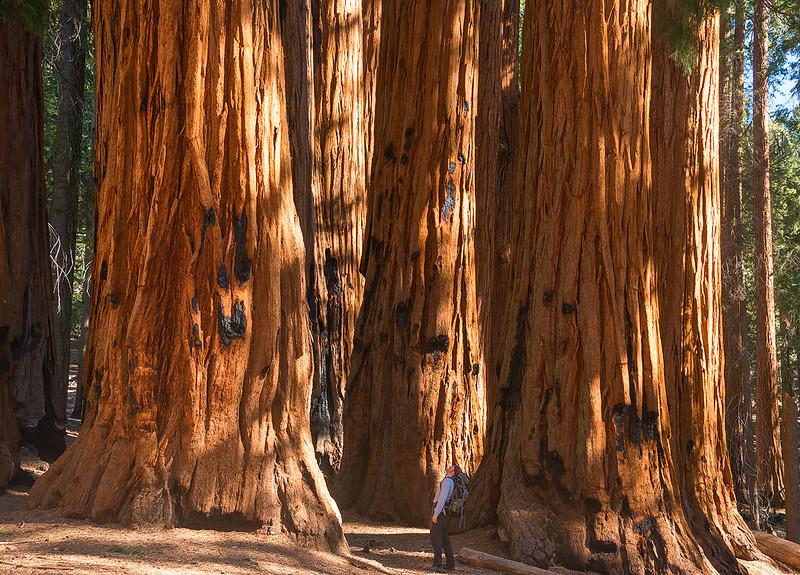 Exploring Sequoia National Park, California - May 2015